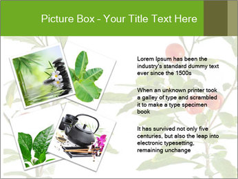 Home plant PowerPoint Templates - Slide 23