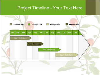 Home plant PowerPoint Templates - Slide 25