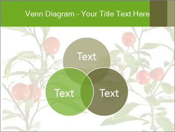 Home plant PowerPoint Templates - Slide 33