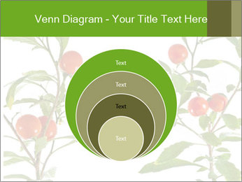 Home plant PowerPoint Templates - Slide 34