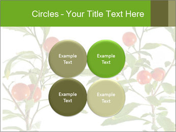 Home plant PowerPoint Templates - Slide 38