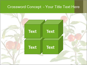 Home plant PowerPoint Templates - Slide 39