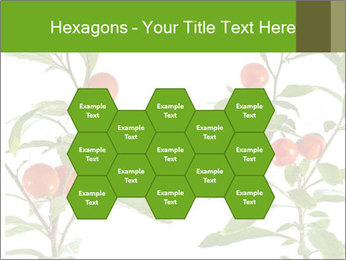 Home plant PowerPoint Templates - Slide 44