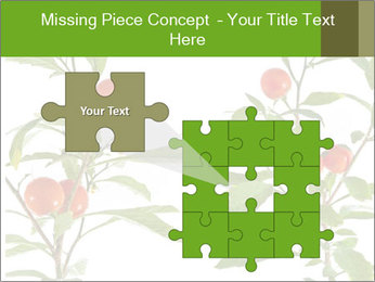 Home plant PowerPoint Templates - Slide 45