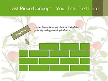 Home plant PowerPoint Templates - Slide 46