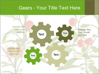 Home plant PowerPoint Templates - Slide 47
