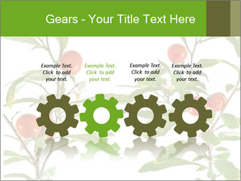 Home plant PowerPoint Templates - Slide 48