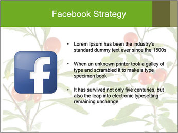 Home plant PowerPoint Templates - Slide 6