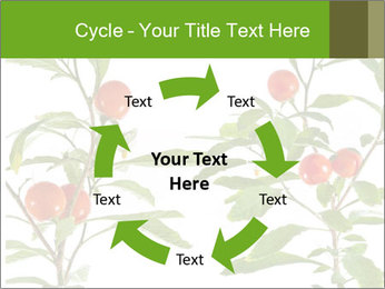 Home plant PowerPoint Templates - Slide 62