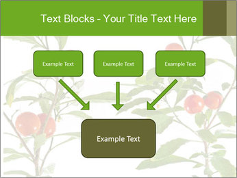 Home plant PowerPoint Templates - Slide 70