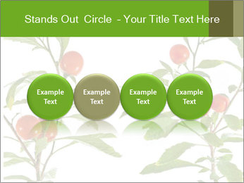 Home plant PowerPoint Templates - Slide 76