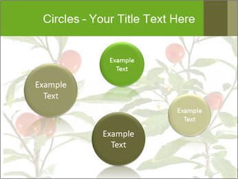 Home plant PowerPoint Templates - Slide 77