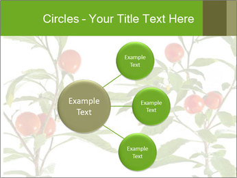 Home plant PowerPoint Templates - Slide 79