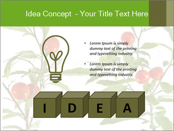 Home plant PowerPoint Templates - Slide 80