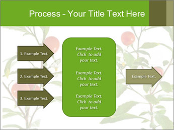 Home plant PowerPoint Templates - Slide 85