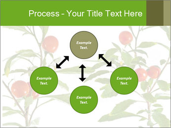 Home plant PowerPoint Templates - Slide 91
