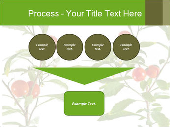 Home plant PowerPoint Templates - Slide 93