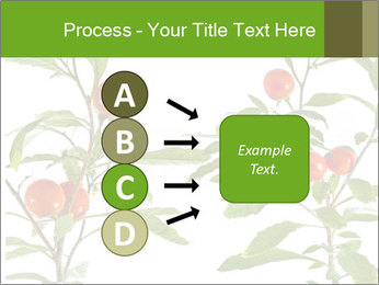Home plant PowerPoint Templates - Slide 94