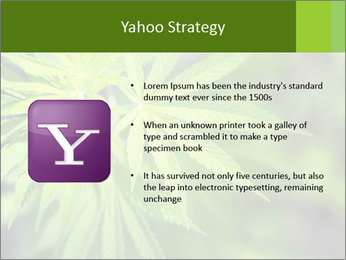 Young cannabis PowerPoint Template - Slide 11