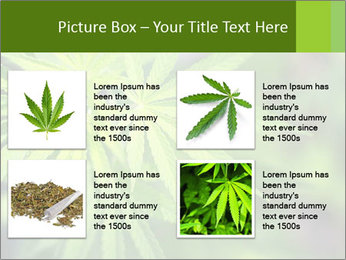 Young cannabis PowerPoint Template - Slide 14