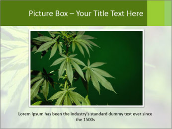 Young cannabis PowerPoint Template - Slide 15