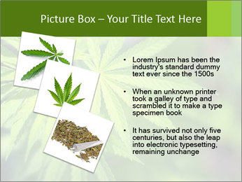 Young cannabis PowerPoint Template - Slide 17