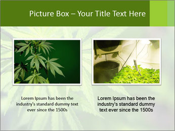 Young cannabis PowerPoint Template - Slide 18