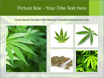 Young cannabis PowerPoint Template - Slide 19