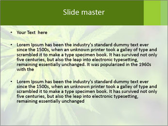 Young cannabis PowerPoint Template - Slide 2