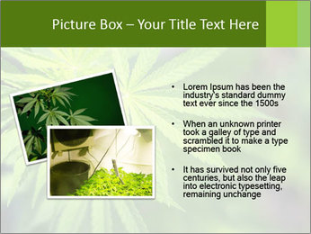 Young cannabis PowerPoint Template - Slide 20