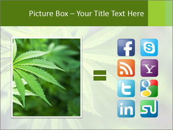 Young cannabis PowerPoint Template - Slide 21