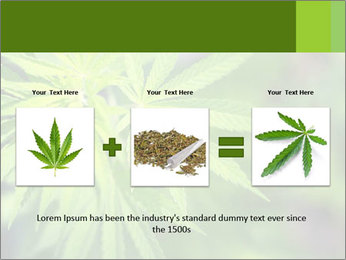 Young cannabis PowerPoint Template - Slide 22