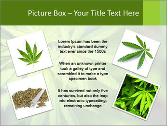 Young cannabis PowerPoint Template - Slide 24