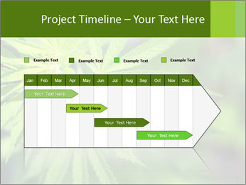 Young cannabis PowerPoint Template - Slide 25