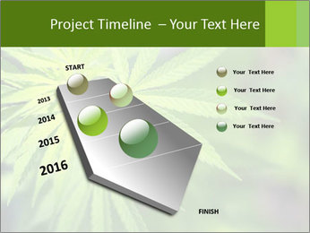 Young cannabis PowerPoint Template - Slide 26