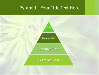 Young cannabis PowerPoint Template - Slide 30