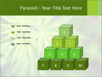 Young cannabis PowerPoint Template - Slide 31