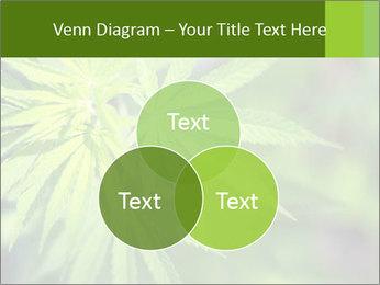 Young cannabis PowerPoint Template - Slide 33