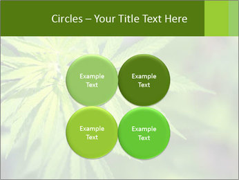Young cannabis PowerPoint Templates - Slide 38
