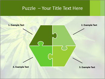 Young cannabis PowerPoint Template - Slide 40