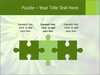 Young cannabis PowerPoint Template - Slide 42