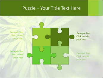 Young cannabis PowerPoint Template - Slide 43