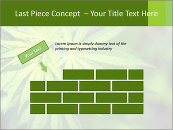 Young cannabis PowerPoint Template - Slide 46