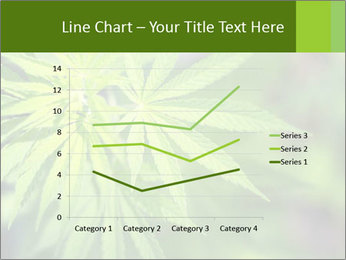 Young cannabis PowerPoint Template - Slide 54