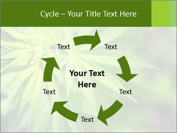Young cannabis PowerPoint Template - Slide 62