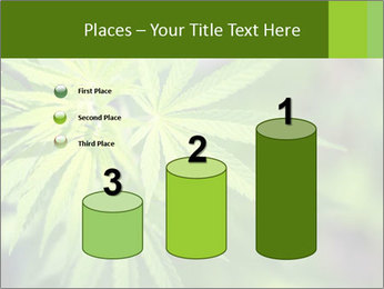 Young cannabis PowerPoint Templates - Slide 65