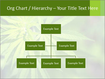 Young cannabis PowerPoint Templates - Slide 66