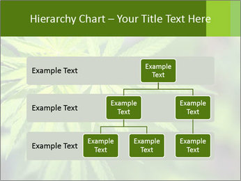 Young cannabis PowerPoint Templates - Slide 67