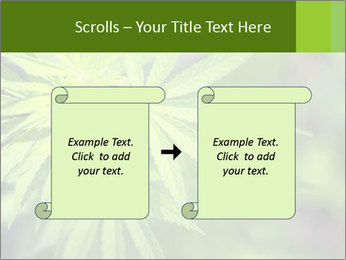 Young cannabis PowerPoint Templates - Slide 74