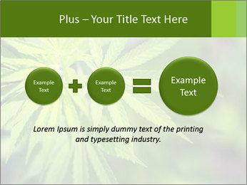 Young cannabis PowerPoint Template - Slide 75